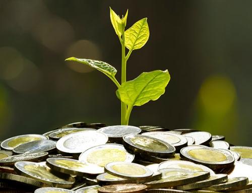 Plantations International Agarwood Investment